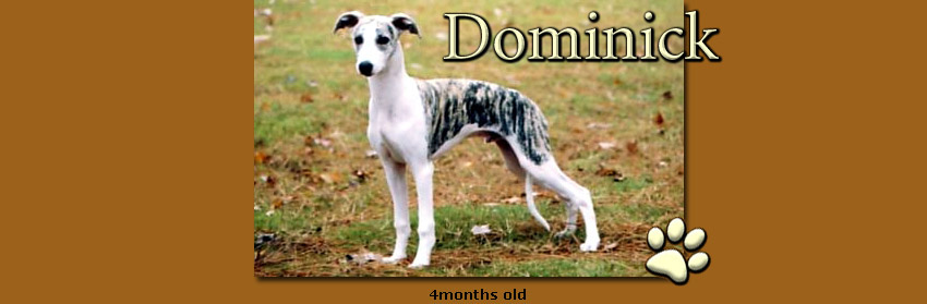 Dominick 4 months old