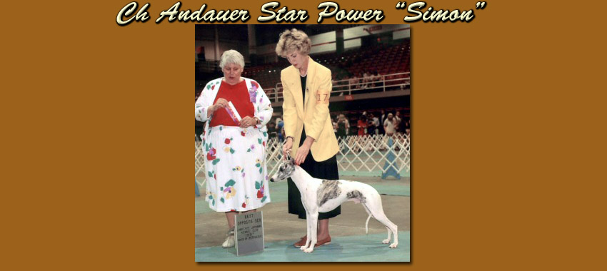 Ch Andauer Star Power